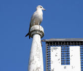 Seagull Watching The World Go By — Stock Photo
