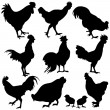 Chicken Silhouetts — Stock Vector #7315626