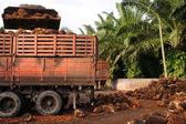 Uploading Palm Oil fruits — Foto Stock