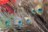 Plumas de pavo real — Foto de Stock