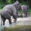 Asian Elephant - Stock Photo