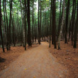 Stock Photo: Walking Hiking Trail Through Woods