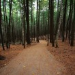 Walking Hiking Trail Through the Woods — Stock Photo