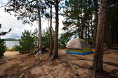 Tent Camping Campsite in the Woods Off the Beach — Stock Photo