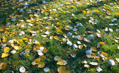 Autumn leaves on a green grass — Stock Photo