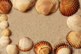 Frame i from sea shells. — Stock Photo