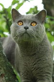 Cat on a tree — Stock Photo