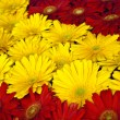 Beautiful red and yellow flower background — Zdjęcie stockowe