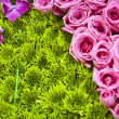 Beautiful colorful flower background — Stock Photo #7367379