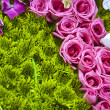Beautiful colorful flower background — Stock Photo