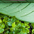 Tropical green leaf - abstract background — Stock Photo