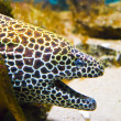 Beautiful dangerous hungry barracud - moray on atoll — Stock Photo #7367913
