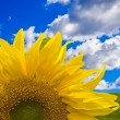 Photo: Flower against blue sky with white clouds