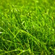 Green grass — Stock Photo #7368138
