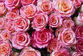 Fond belle fleur rose — Photo