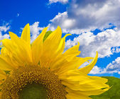Flower against blue sky with white clouds — Stock Photo