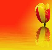 Vacker blomma på röd och gul bakgrund — Stockfoto