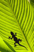 Silhouette of a Gecko and a fly on a leaf — Stock Photo