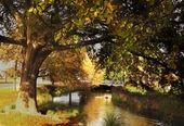 River in Autumn — Stock Photo