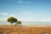 Lonely Tree on the beach — Stock Photo