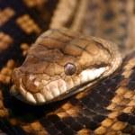 Alert Snake — Stock Photo #7665866