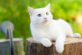 White cat in the garden — Stok fotoğraf