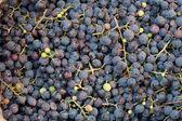 Fundo de uva azul — Fotografia Stock