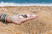 Hands with sea shells — Stock Photo