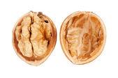 Closeup of a walnut — Stock Photo