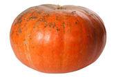 Single Pumpkin isolated on white — Stock Photo