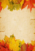 Autumn leaves on an old paper — Stock Photo