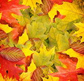 Autumn leaves, can be used as a background — Stok fotoğraf