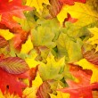 Autumn leaves, can be used as a background - Stock Photo