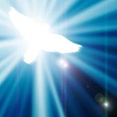 青色の背景に輝くの鳩 — ストック写真