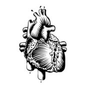 Anatomy heart — Stock Vector