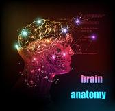 Human brain background — Stock Vector