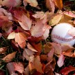Baseball in fall season — Stock Photo
