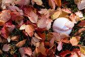 Baseball in fall season — Stock Photo