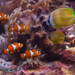 Tropical fishes — Stock Photo #7530011