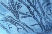 Frosty pattern at window — Stock Photo