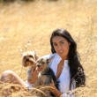 Beautiful brunette in a field of straw with two yorkshire dogs — Stock Photo