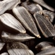 Sunflower seeds - Stock Photo