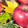Red fresh apples with autumn leafs — Stock Photo