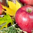 Red fresh apples — Stock Photo #7840403