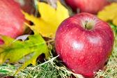 Maçãs frescas vermelhas com outono folhas — Foto Stock