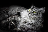 Cats head — Foto Stock