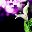 White fresh orchid — Stock Photo