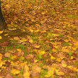 Stock Photo: Autunno