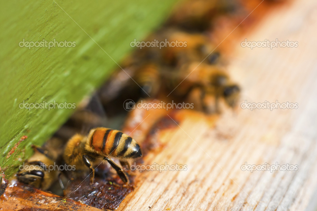 Bee in to nature — Stock Photo #7484439