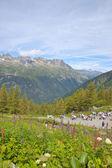 Alpi chamonix — Foto Stock
